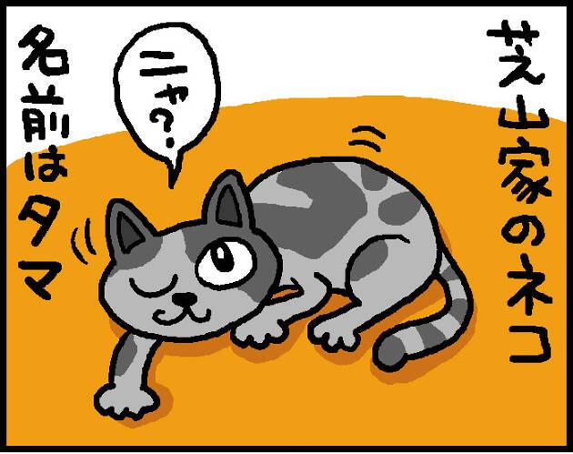 【第12話】タマの悲劇