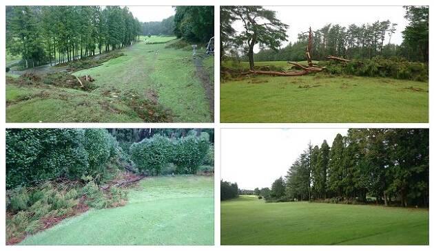 ラフには、倒木で未処理の木がたくさんありました