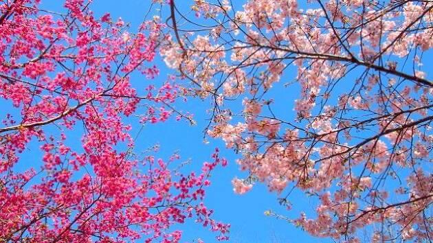 お花を愛でる心のゆとりを