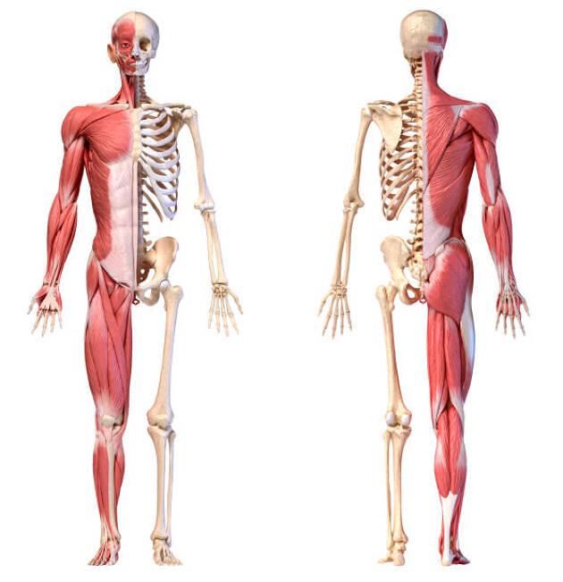 人の体は「安定性を求める関節」「稼働域を求める関節」でできている