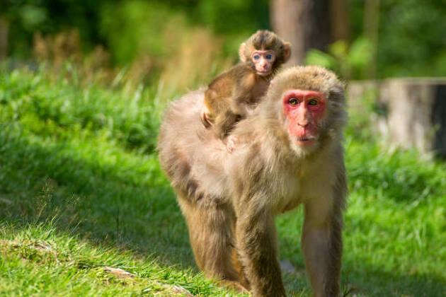 「ギア猿」で楽しく勉強!