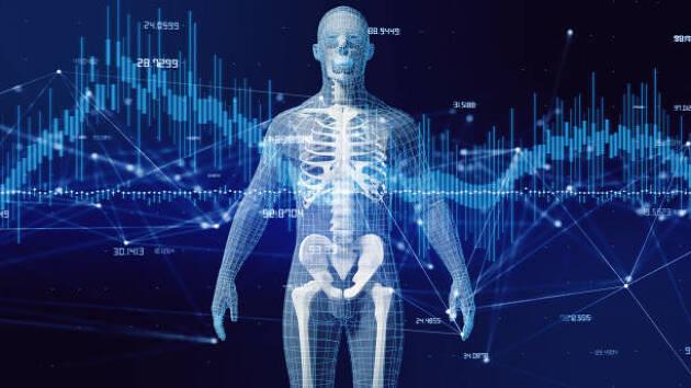 人間の骨格