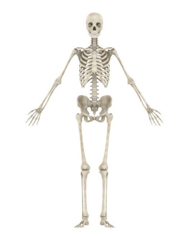 下半身リードに必要な身体的条件