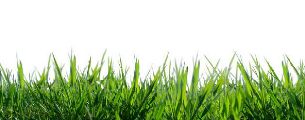 スティンプメーターに影響を与えるものは芝の長さ