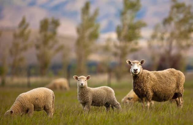 羊を数えるのは英語圏の自己暗示