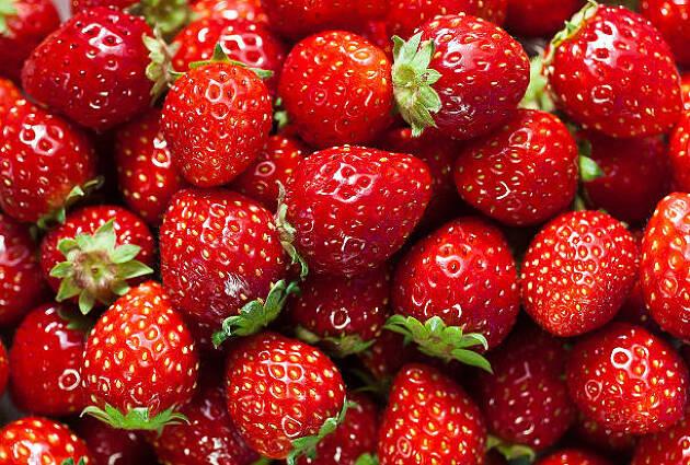 イチゴはフルーツ?野菜?