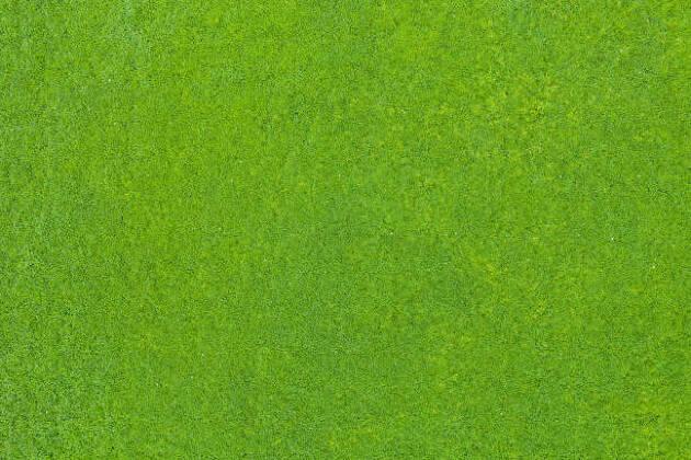 4.芝の種類を確認しよう